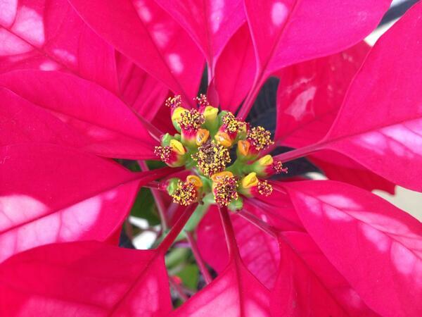 冬に咲く花を知ってお部屋を明るくする7つの方法