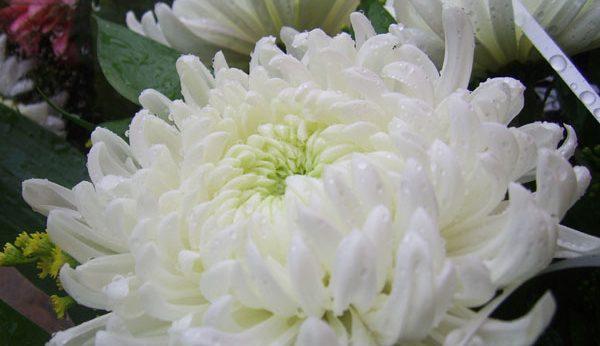 私が献花をした時に失敗してしまった9つの例