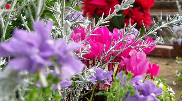 ガーデニング初心者にも育てやすい冬花を選ぶ7つのポイント