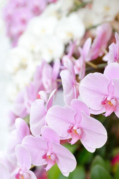 蘭をプレゼントされたらまず押さえるべき、育て方9つの注意点
