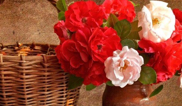 贈る前に知っておきたい薔薇の花言葉、9つの意味