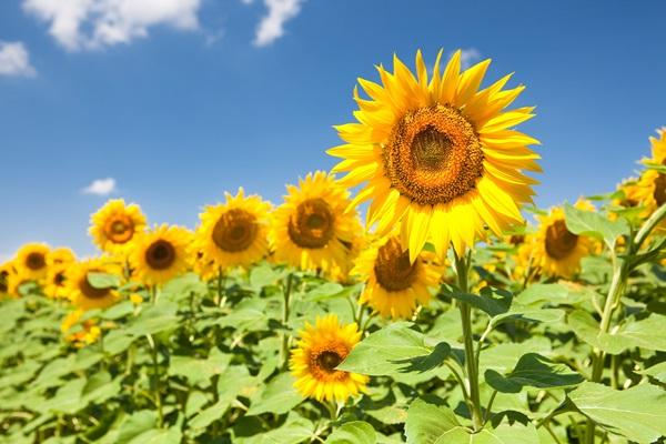 梅雨の時期でもお部屋を明るくしてくれる、7つの初夏の花
