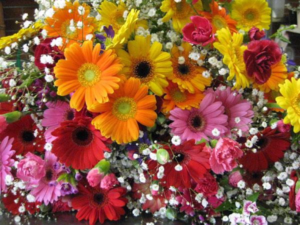 おばあちゃんが喜ぶプレゼント。愛を伝える花々7選