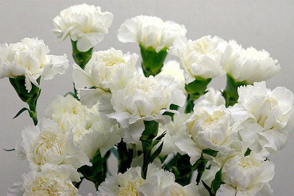 献花を選ぶ時に知っておきたい大事な7つの事