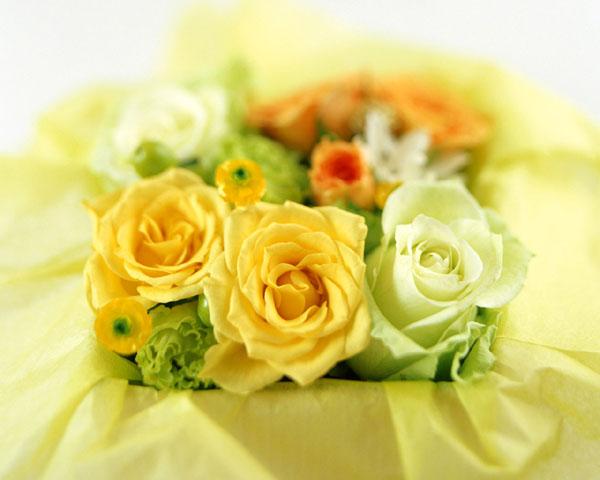 1輪から大型まで!大きさでわかる花束の値段、7つの相場