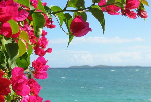 ブーゲンビリアの育て方。綺麗な花を咲かせる9つのコツ