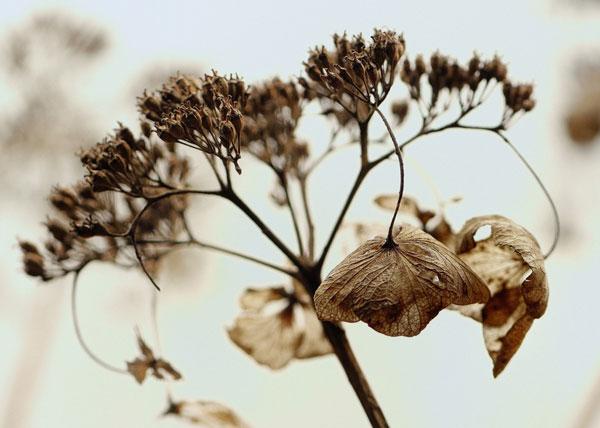 怖い花言葉の花を間違って贈らないよう知っておきたい7つのこと