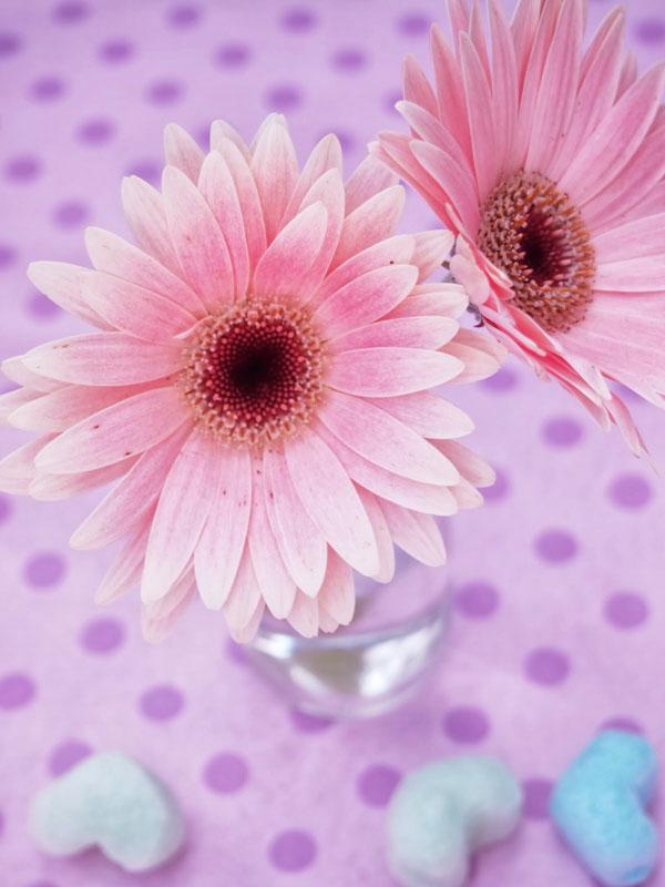 花言葉を添えたガーベラの花で友達を超感動させる7つの方法