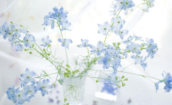 デルフィニウムの花言葉を使って素敵なプレゼントを贈る7つの方法