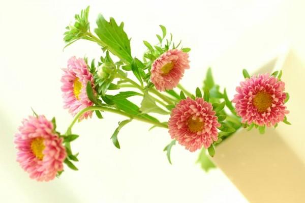 アスターの花言葉に合わせて。一緒に花束にすると素敵な7つの花