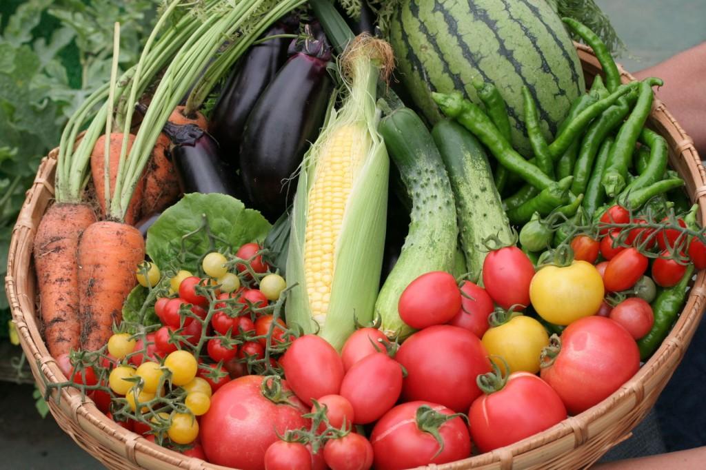 夏野菜の栽培を必ず成功させるための7つのポイント☆