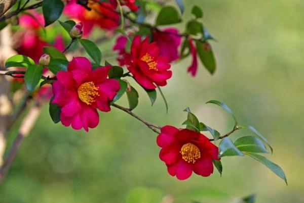 山茶花の花言葉を添えて、粋なメッセージカードを送る7つの方法