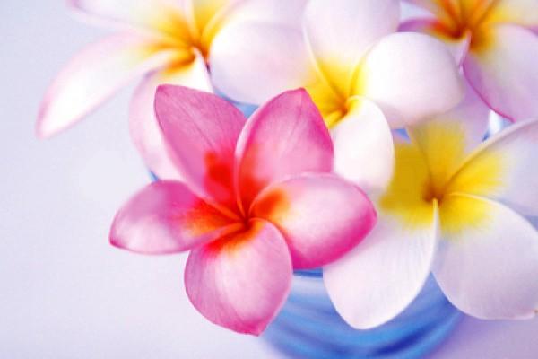 プルメリアの花言葉を使って、女性にメッセージを送る5つの方法