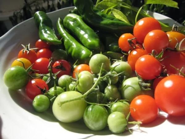 夏野菜の育て方、水耕栽培でも上手にできる7つのおススメ野菜☆
