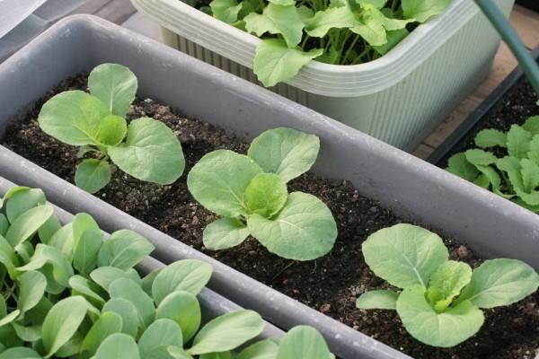 プランターで野菜の栽培をする時に必ず揃えておきたい7つの道具☆