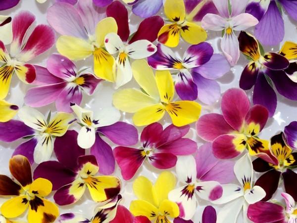 ビオラの花言葉を使って好きな人に贈り物をする7つの方法