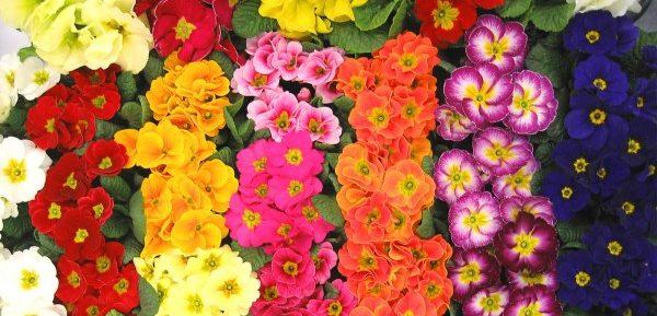 冬でもお花を楽しみたい人へ。冬花を選ぶ9つのポイント