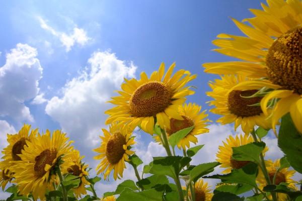 【夏の花図鑑】夏の部屋に飾りたい10つの花と花言葉☆