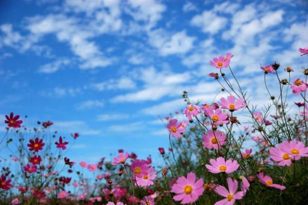 夏の暑さから守り、秋に咲く花を上手に育てる7つのコツ☆