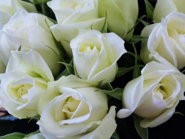 白いバラの花言葉を上手に使って贈り物をする7つのコツ