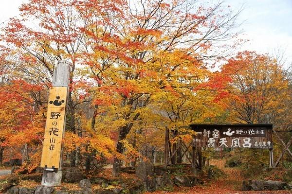 自然を満喫!野の花山荘の周辺お勧めスポット7選