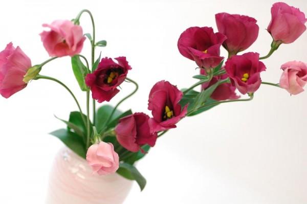 トルコキキョウの花言葉を恋人に贈ると喜ばれる7つの理由