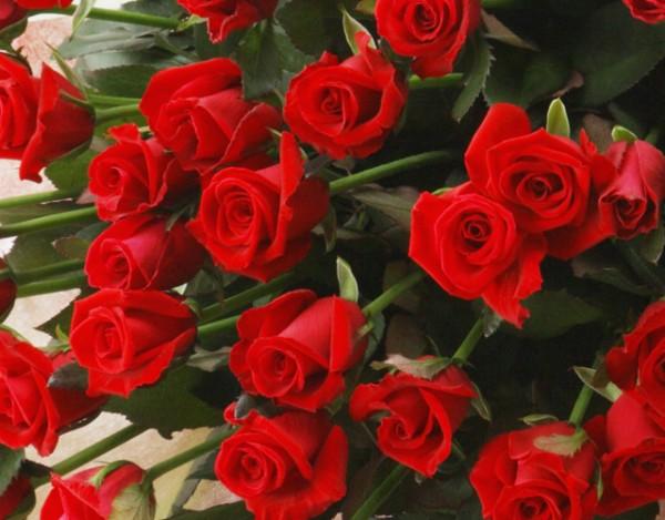 赤いバラの花言葉を使って粋なプロポーズをする7つの方法