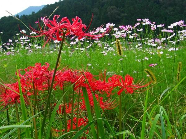 初心者でも育てやすい秋に咲く花、お勧め10選☆
