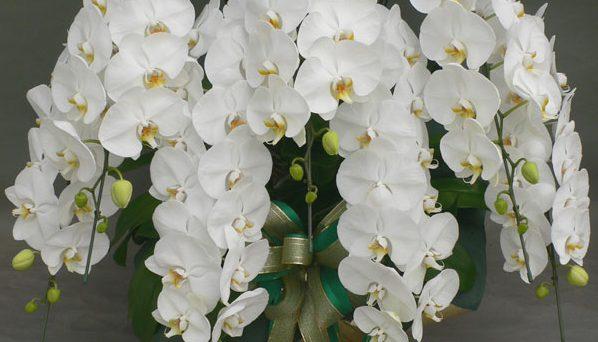 胡蝶蘭の花言葉が贈り物にめちゃめちゃ喜ばれる7つの理由