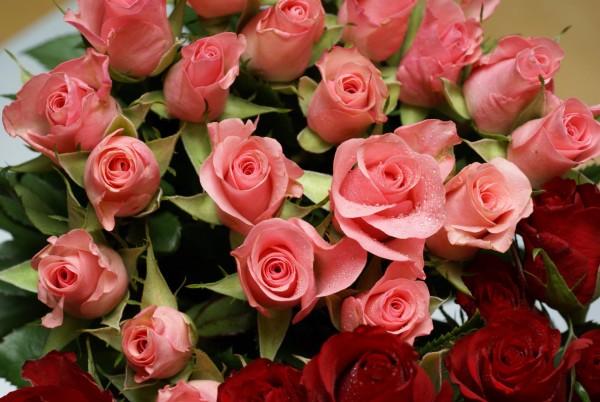 花言葉の贈り物、バラを使って気持ちを伝える7つの理由☆