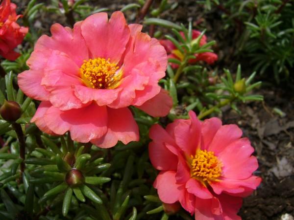 【夏の花図鑑】赤・ピンク・紫の夏に咲くお花、10選☆