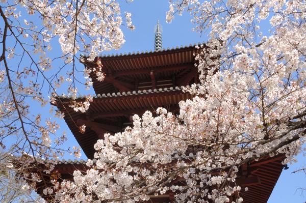 桜の種類と名前