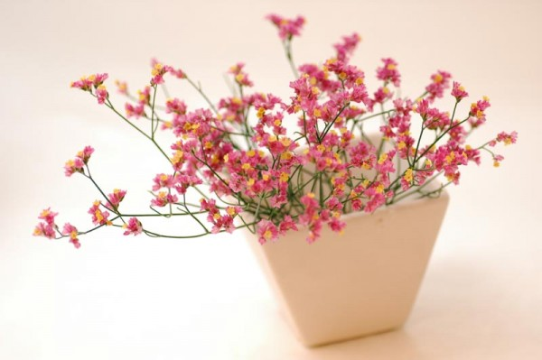 スターチスの花言葉を贈って、女性を超喜ばせる7つの方法