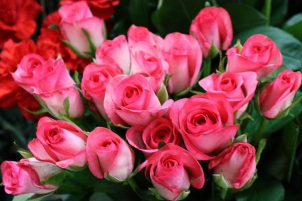 バラの花言葉を知って、気持ちを上手に伝える7つの秘訣