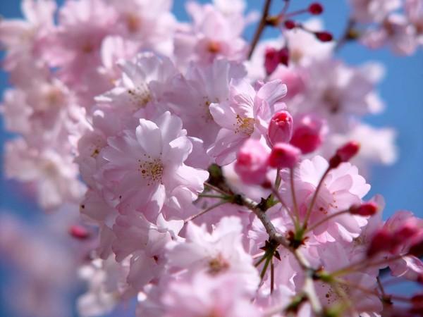 花言葉一覧から見る、愛の告白にぴったりなお花ベスト7☆