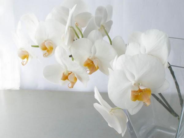 胡蝶蘭の花言葉のような女性になるためには☆7つの格言