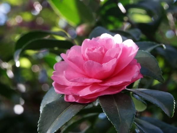 冬の花言葉一覧☆心がポッと温かくなる素敵なメッセージ