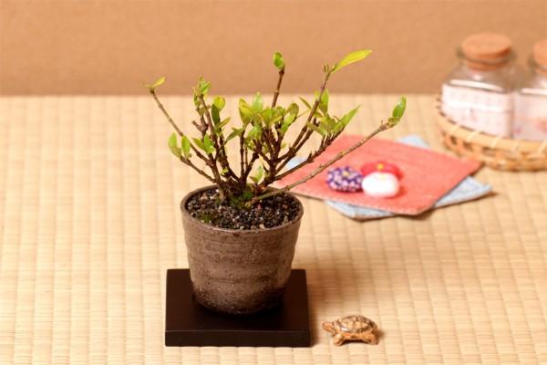 米寿のプレゼントと一緒に渡すのにぴったりなお花とは