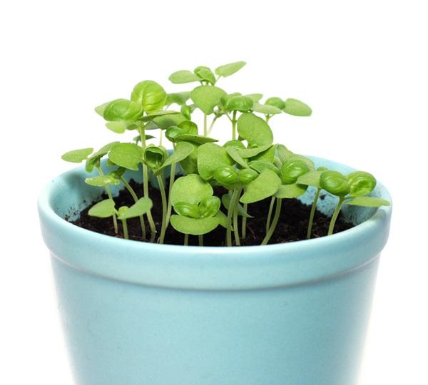 ハーブの育て方は意外と簡単☆定番品種の栽培ポイント
