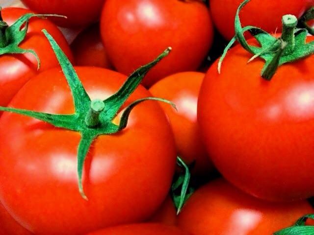 野菜は育て方で味が変わる?自分好みのトマトを作る方法