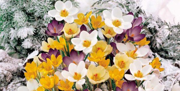 冬花は育てやすく多種多様!寄せ植えで庭を彩る7つのコツ