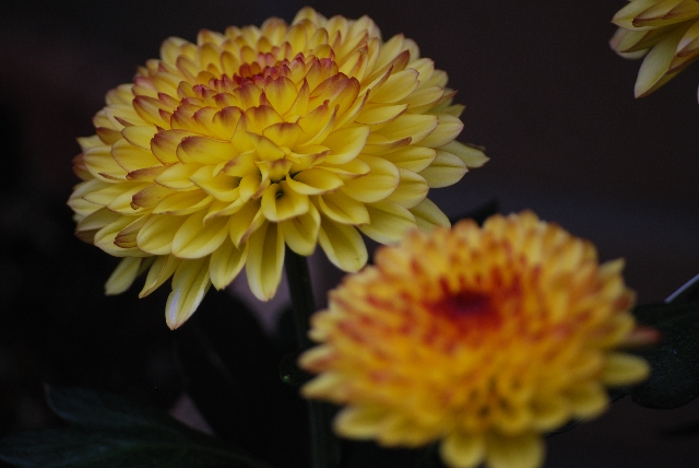 仏花にプリザーブドフラワーも。供え花の最新マナーとは