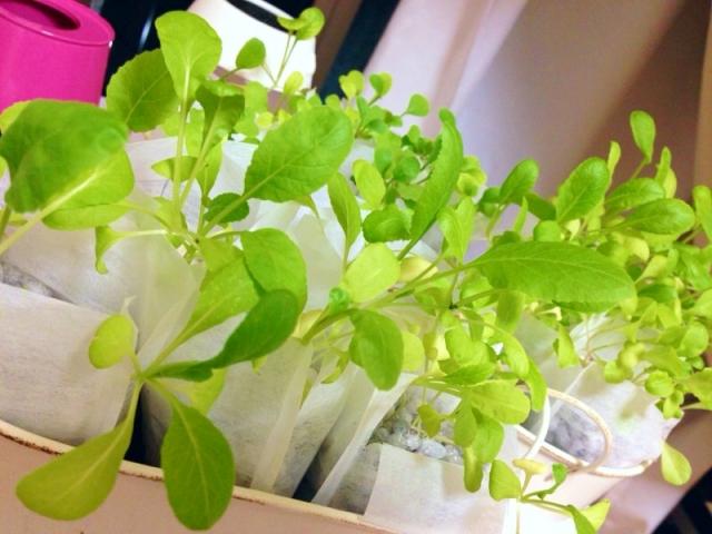 野菜の栽培で心が癒され、心身ともに健康になれる理由