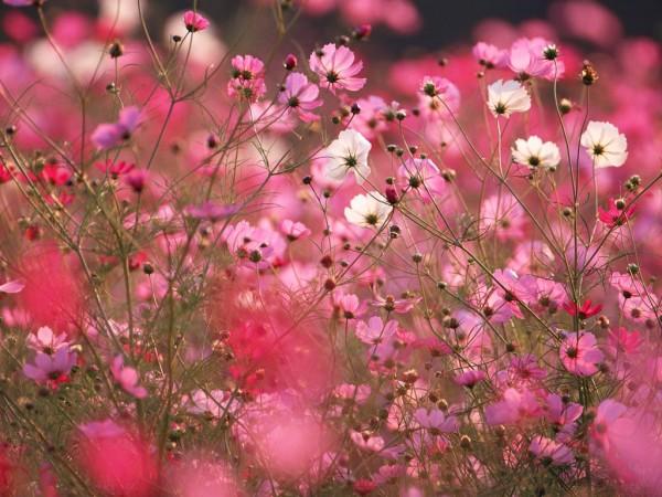 秋の花を楽しもう!絶対行っておきたい7つの名所