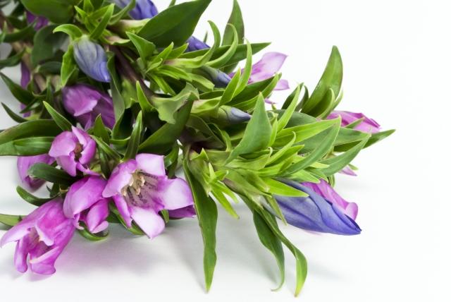 リンドウの深い花言葉で、愛情と心を贈る7つの方法