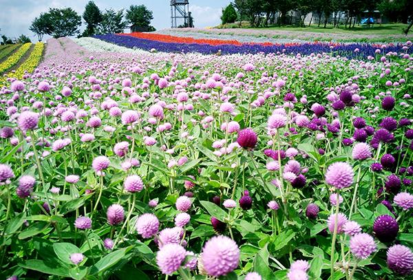 夏に咲く花・初心者でも育てやすい可愛い品種を紹介♪