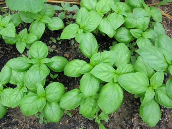 野菜栽培を種まきから始める際の年間スケジュール例