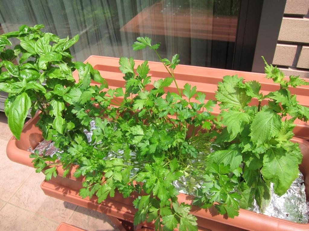 野菜栽培で失敗しがちな悪環境を改善する7つの方法