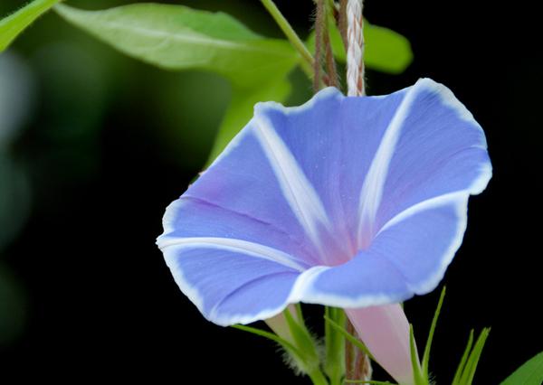 夏に咲く花に癒される!初心者も育てやすいオススメ7種