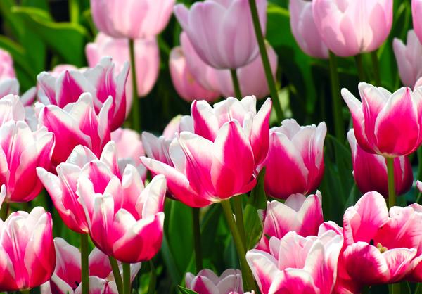 誕生日にサプライズを♪彼女が喜ぶ7種類の可愛い花